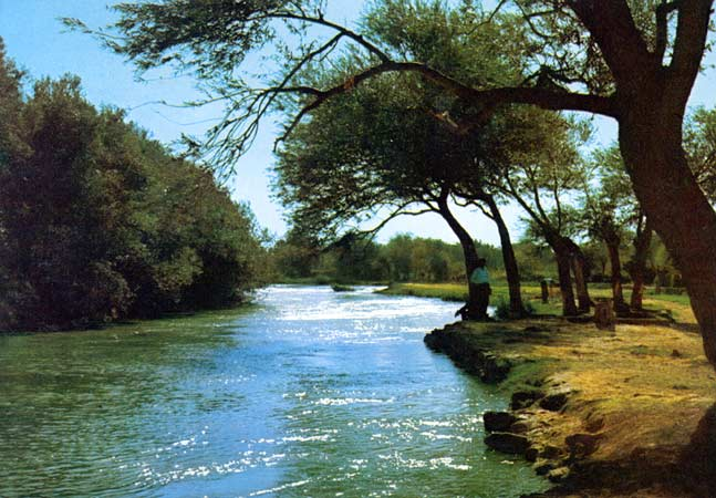 ضفاف النهر